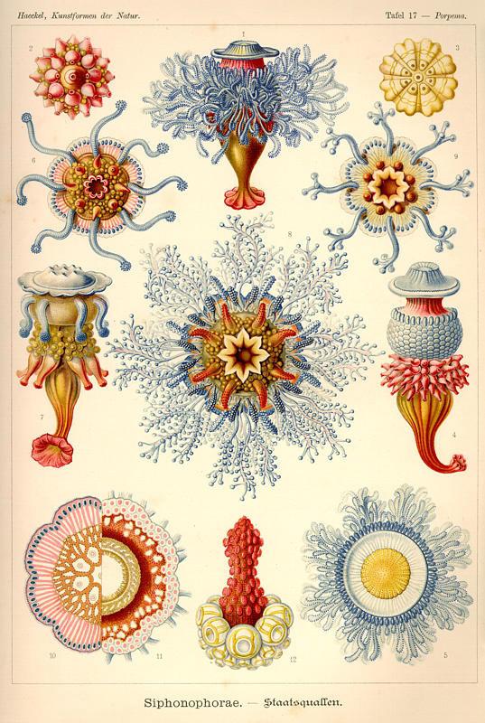 Oceanartforms